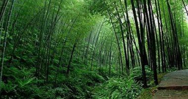 صورة اكتشاف لوحة حجرية لحماية الغابات عمرها 350 سنة بوسط الصين
