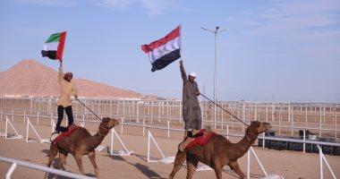 صورة مدينة شرم الشيخ تستضيف أكبر حدث تراثى عربى اليوم