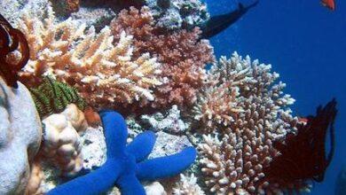 صورة دليل الرحلات البحرية بالمحميات الطبيعية