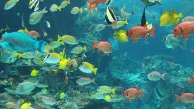 صورة هل تعلم عن الكائنات المائية